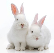 Breeding Meat Rabbits All The Information You Need